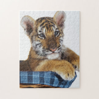 Siberian Tiger Cub in basket Jigsaw Puzzle