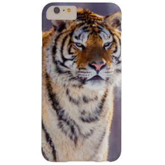 Siberian tiger in snow, China Barely There iPhone 6 Plus Case