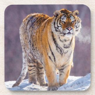 Siberian tiger in snow, China Coaster