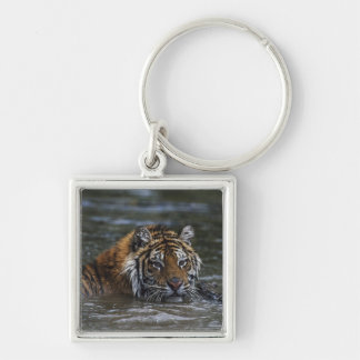 Siberian Tiger In Water Silver-Colored Square Key Ring