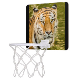 SIBERIAN TIGER ON  MINI BASKETBALL GOAL MINI BASKETBALL HOOP