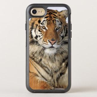 Siberian Tiger, Panthera tigris altaica, Asia, OtterBox Symmetry iPhone 7 Case