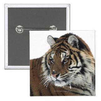 Siberian Tiger (Panthera Tigris Altaica) 15 Cm Square Badge