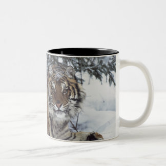 Siberian Tiger (Panthera Tigris Altaica) Two-Tone Mug