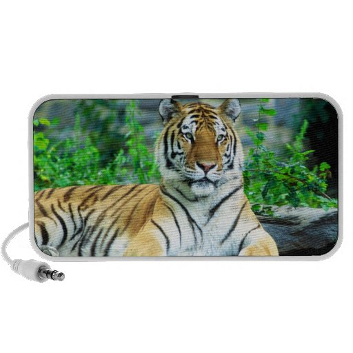 Siberian Tiger Speaker