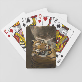 Siberian Tiger Stare Playing Cards