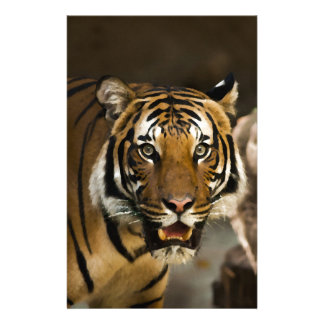 Siberian Tiger Stationery
