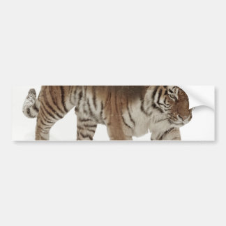 Siberian tiger-Tiger-double exposure-wildlife Bumper Sticker