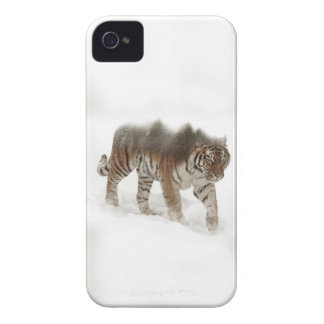 Siberian tiger-Tiger-double exposure-wildlife Case-Mate iPhone 4 Cases