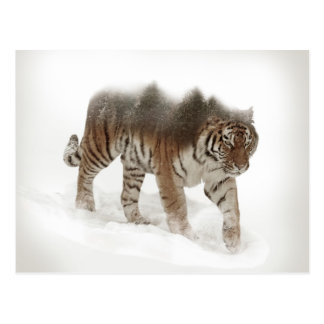 Siberian tiger-Tiger-double exposure-wildlife Postcard