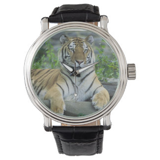 Siberian Tiger Watches