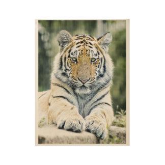 Siberian Tiger Wood Poster