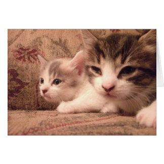 Sibling Kitties Greeting Card