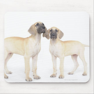 side by side,small group of animals,togetherness mousepad