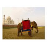 Side profile of an elephant, Taj Mahal, India Postcard
