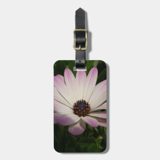 Side View of A Pink and White Osteospermum Luggage Tag