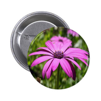 Side View Of A Purple Osteospermum With Garden Bac 6 Cm Round Badge