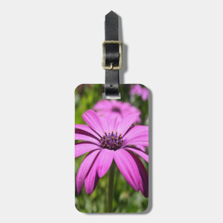 Side View Of A Purple Osteospermum With Garden Bac Luggage Tag