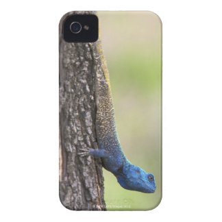 Side view of a Tree Agama (Acanthocerus iPhone 4 Covers