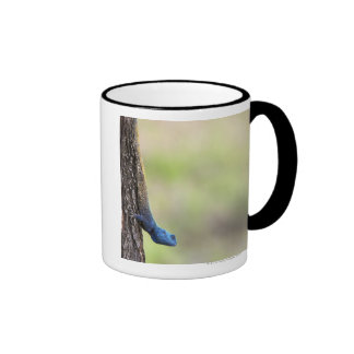 Side view of a Tree Agama (Acanthocerus Ringer Mug