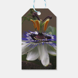 Side View of Beautiful Passiflora Flower Gift Tags