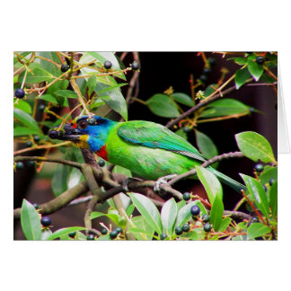 Side View Of Green Barbet Card