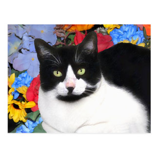 """Sidney"" Cat Postcard"