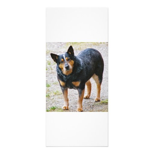 Sidney the Blue Heeler Personalized Rack Card