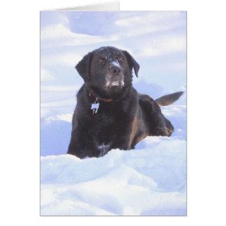 """Sidney the Wonder Dog"" Card"