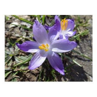 Sign Of Spring Postcard