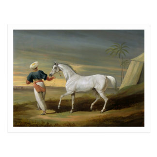 Signal, a grey Arab, with a Groom in the Desert (o Postcard