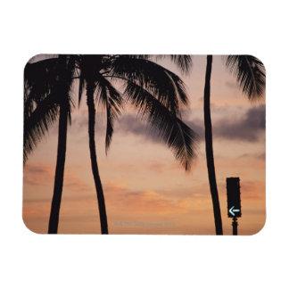 Signal and Palm Tree Rectangular Photo Magnet