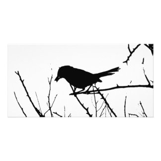 Silhouette Black and White Catbird on Bare Branch Personalized Photo Card