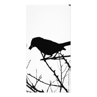 Silhouette Black and White Catbird on Bare Branch Photo Greeting Card