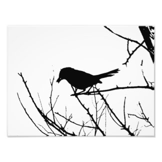 Silhouette Black and White Catbird on Bare Branch Photographic Print
