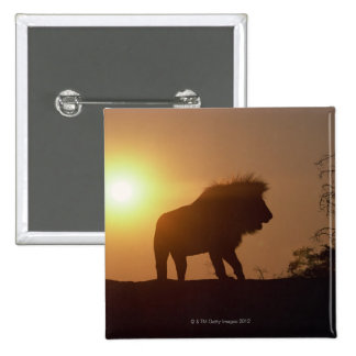 Silhouette of a lion 15 cm square badge