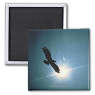 Silhouette of bald eagle flying in sky magnet