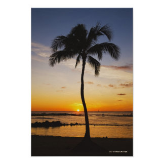 Silhouette of one Palm Tree by a Red Orange Sunset Poster