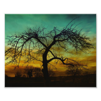Silhouette of Tree in Sunset Photo Print
