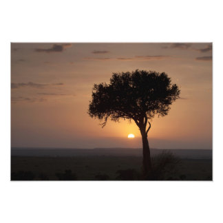 Silhouette of tree on plain, Masai Mara 2 Photo Print