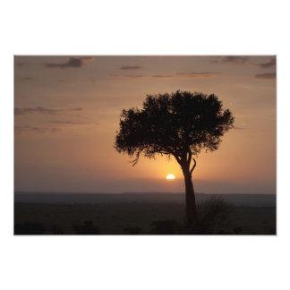 Silhouette of tree on plain, Masai Mara 2 Photo