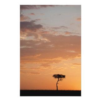 Silhouette of tree on plain, Masai Mara Photo Art