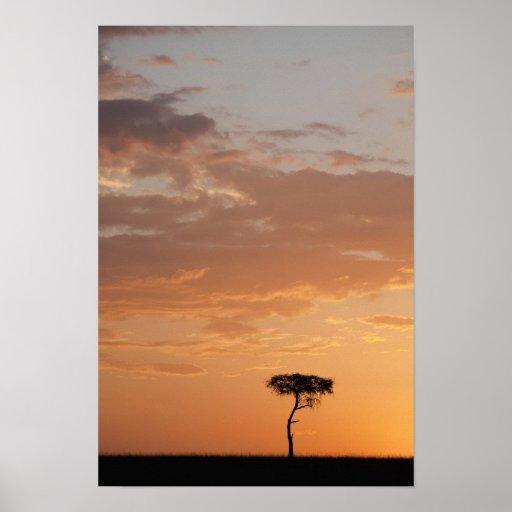 Silhouette of tree on plain, Masai Mara Poster