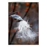 Silken Seeds Fly Greeting Card