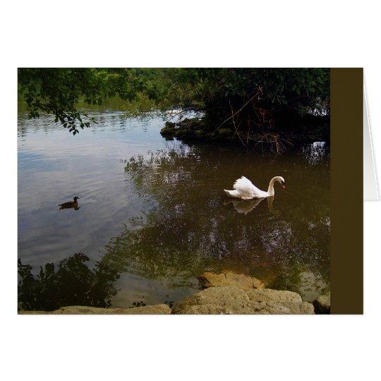Silken Swan Card