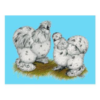 Silkie Bantam Splash Chickens Postcard