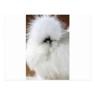 Silkie Chicken Postcard