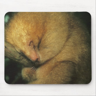 Silky Pygmy) Anteater, Cyclopes didactylus), Mouse Pad