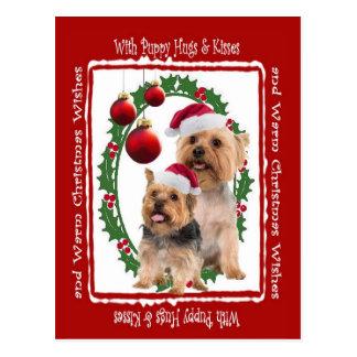 Silky Terrier Christmas Hugs and Kisses Postcard