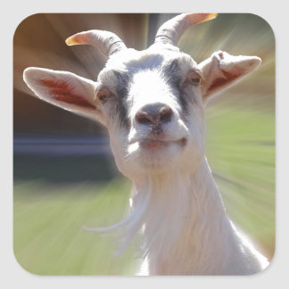 Silly BillyGoat Photograph Square Sticker